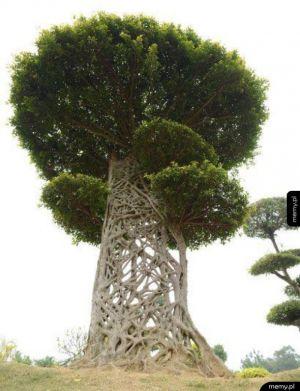 Stworzone przez naturę