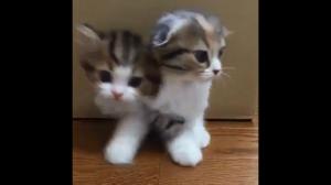 Koci portal