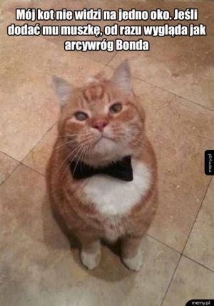 Witam, panie Bond...