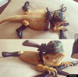 Comando jaszczur