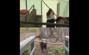 Pies vs człowiek