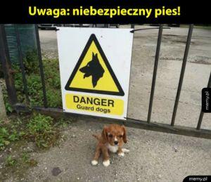 Groźny pies