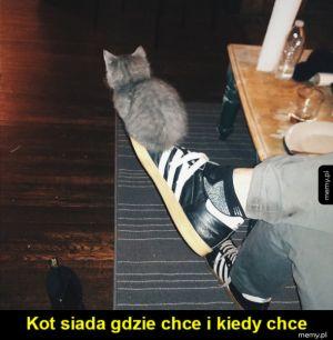 Kotki takie są