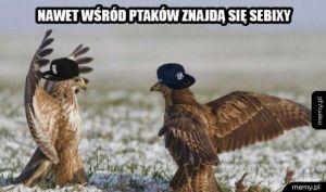 Sebixy
