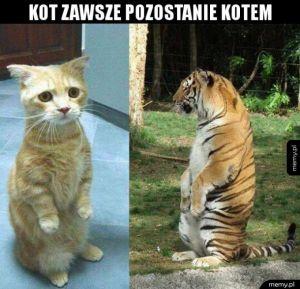 Nieważne, czy kot jest dziki, czy domowy