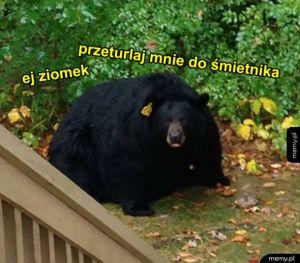 Co ten niedźwiedź