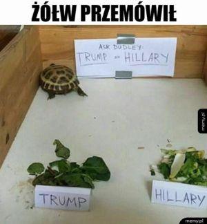 Żółw przemówił
