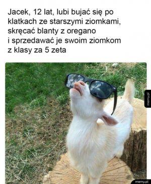 Jacek 12
