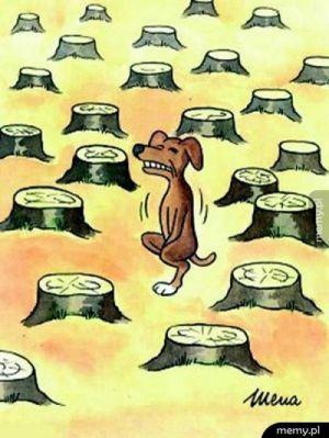 Dbajcie o drzewa