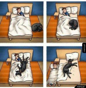 Uroki życia z psem