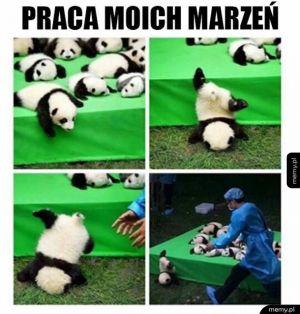 Ogarniacz pand