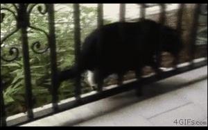 Problemy grubych kotów
