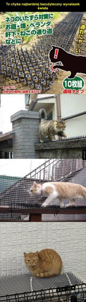 Kolce na koty