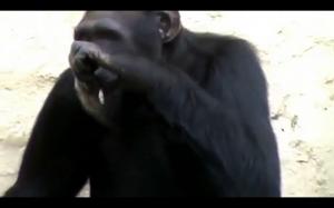 Dowód na to, że ludzie pochodzą od małp