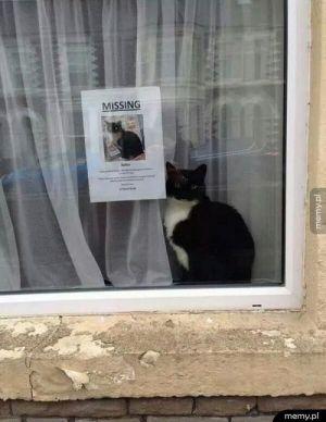 Czy ktoś widział mojego kota?