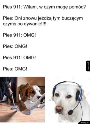 Pies 911