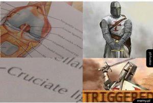 Krzyżowiec uczy się anatomii