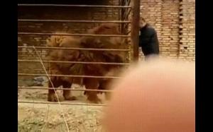 A tak wygląda pies tybetański: