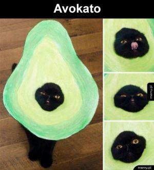 Dziwny nowy owoc