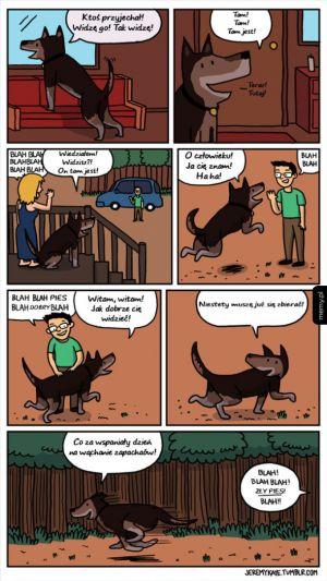 Psie życie
