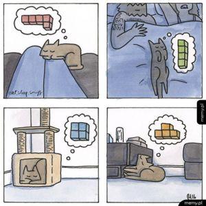 Myślenie kota w pigułce