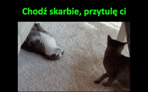 Czuły koteł
