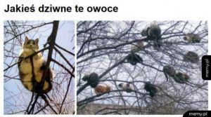 Kotki na drzewach