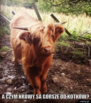 Mała krowa XD