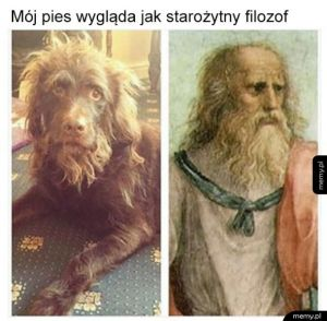Psi filozof