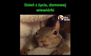 Życie wiewiórki