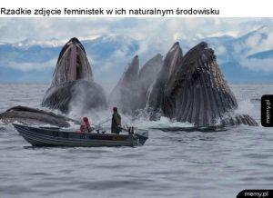 Zdjęcie feministek