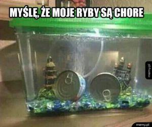 Moje ryby chorują